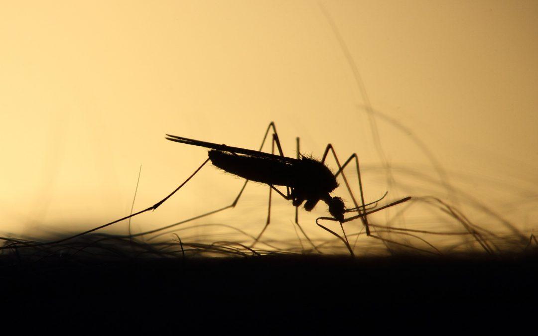 West Nile Virus Season